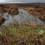 Healthy blanket bog, Peak District, winter