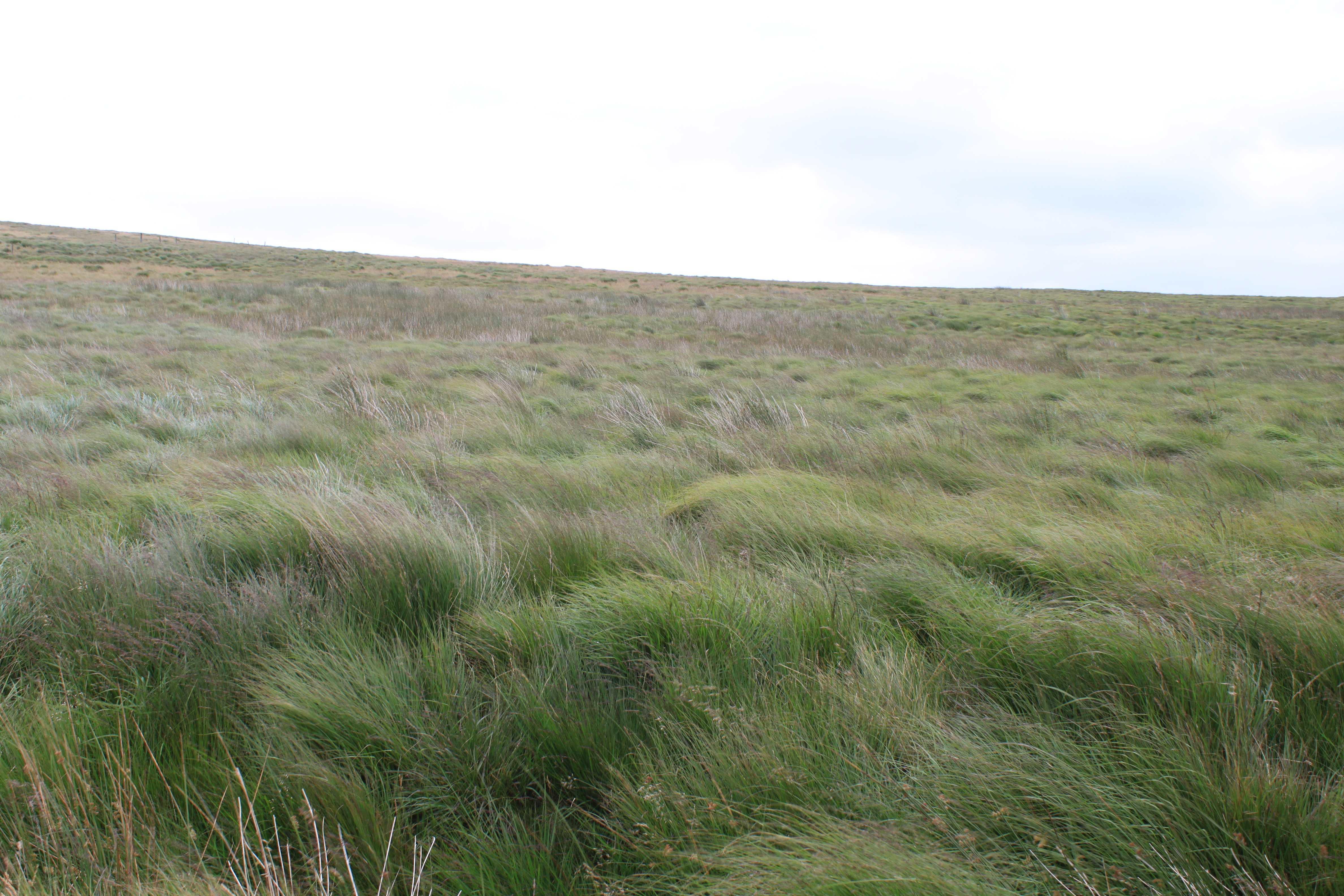 Looking for the blanket bog on heather hill upper calder for Like long grasses