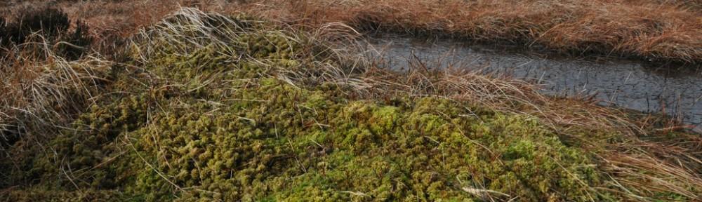 healthy blanket bog Peak District (winter)