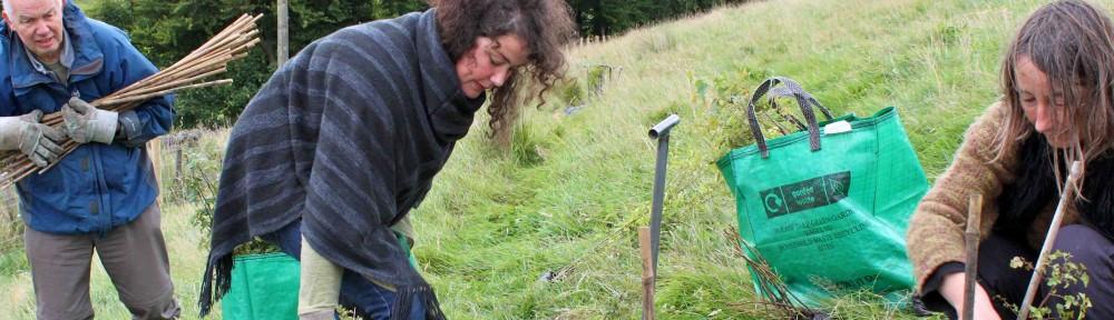 BEAT treeplanting lores