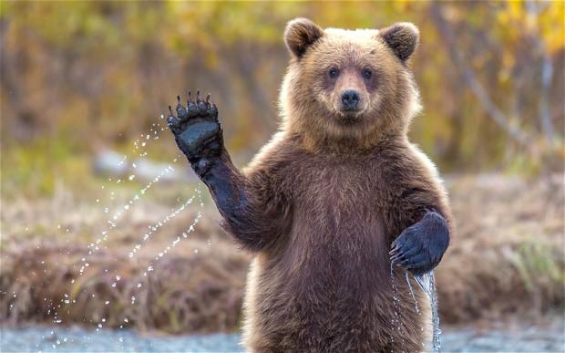 potd-bear_2789207b