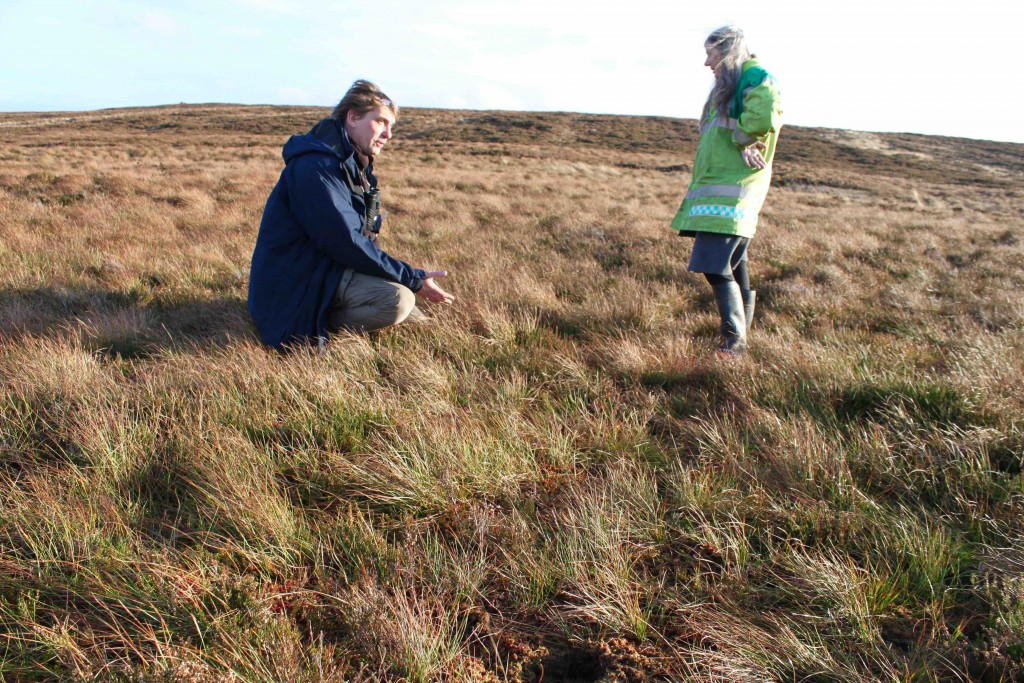 Where the heather has been cut grassland, small shrubs and sphagnum have regenerated themselves