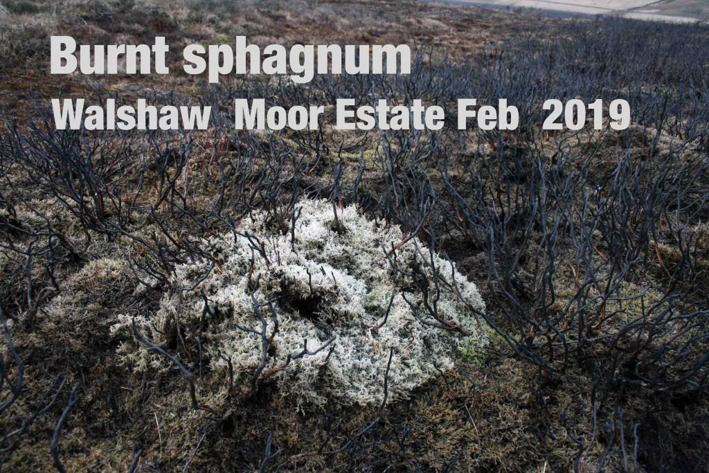 Burnt sphagnum WME Feb 2019_lores